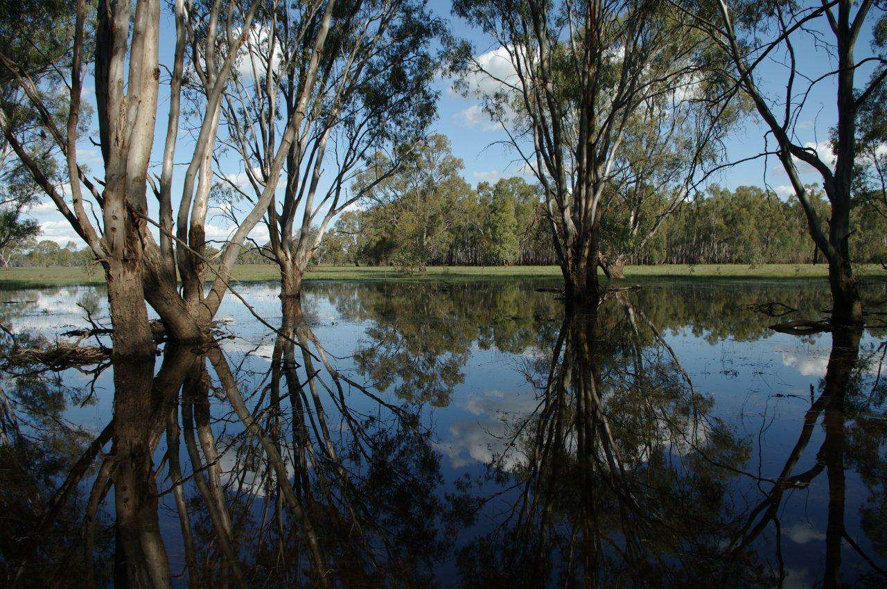 Barmah Forest - Steamer Plain near Budgee Ck